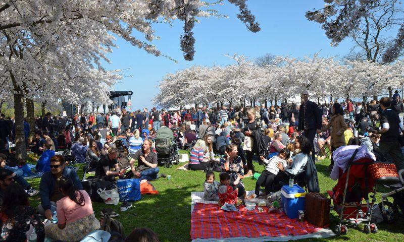PR-foto, Copenhagen Sakura Festival