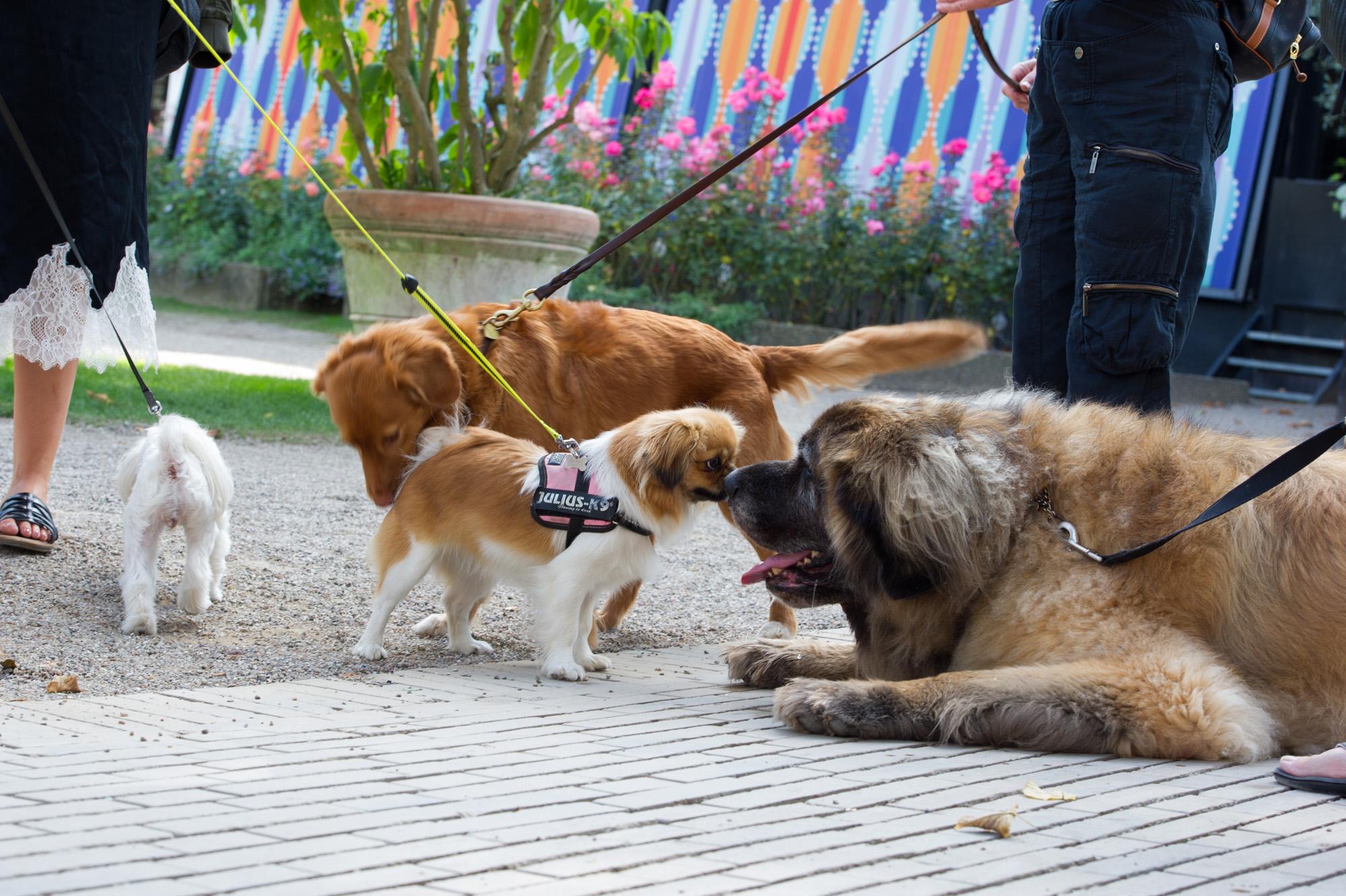 Hunde Tivoli