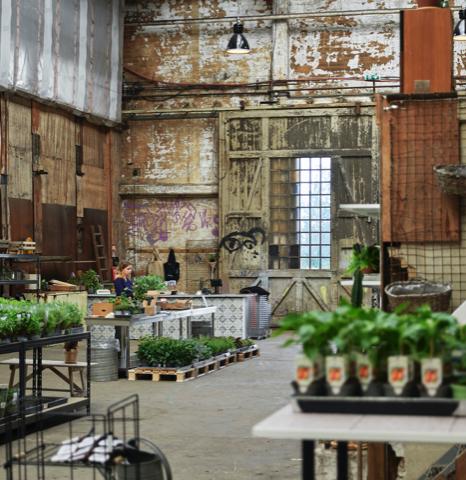 I weekenden er der blandt andet Høstmarked hos Byens Plantetorv på Refshaleøen. Foto PR