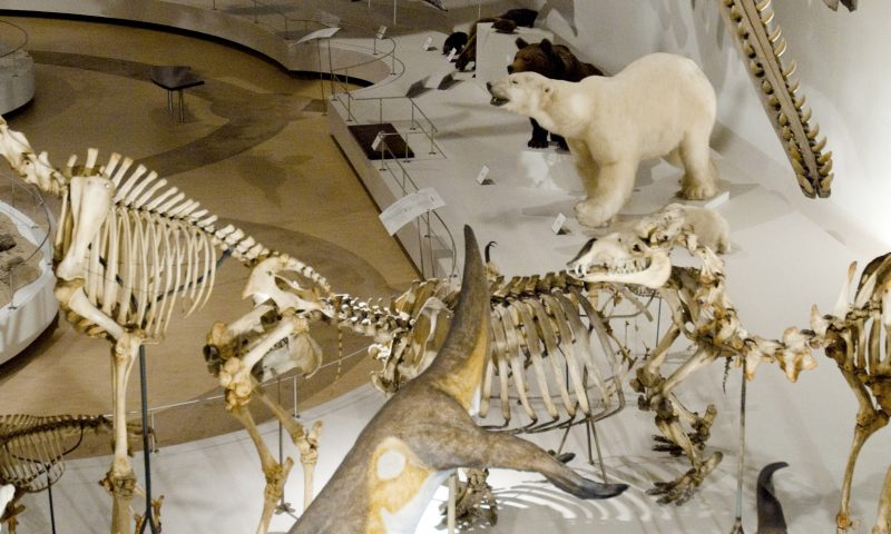Foto: Jens Astrup, Statens Naturhistoriske Museum, PR